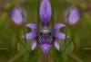 e-bbb_-f-05-0409